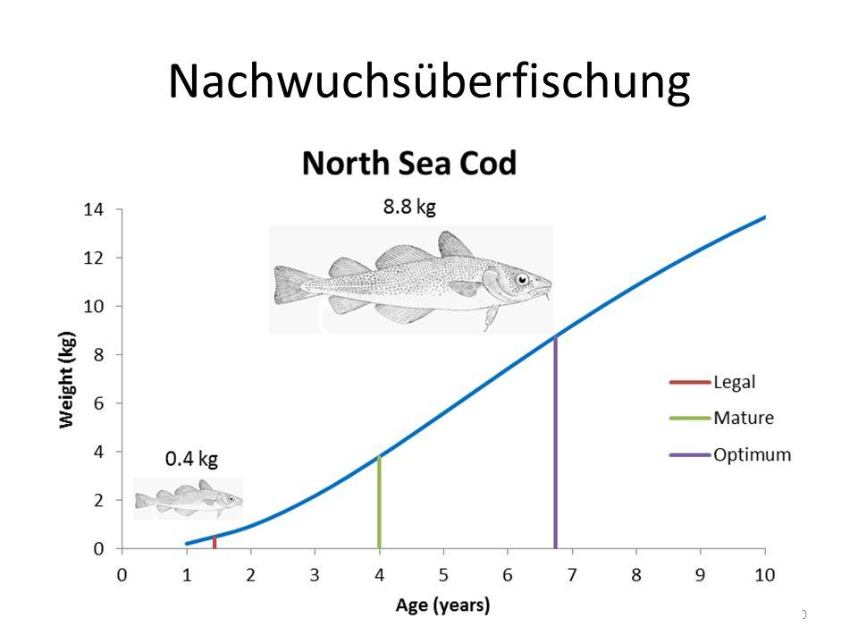 Nachwuchsüberfischung