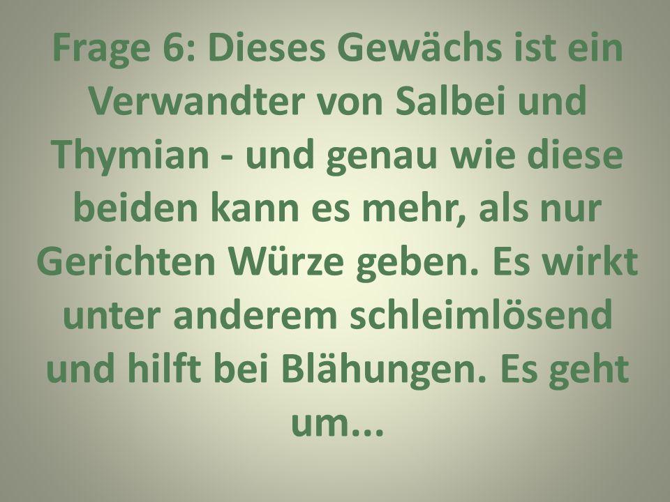Frage 6: Dieses Gewächs ist ein Verwandter von Salbei und Thymian - und genau wie diese beiden kann es mehr, als nur Gerichten Würze geben.