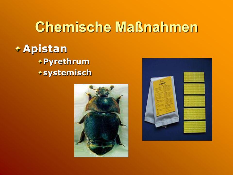 Chemische Maßnahmen Apistan Pyrethrum systemisch