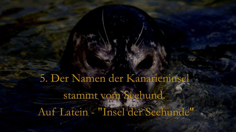 5. Der Namen der Kanarieninsel stammt vom Seehund.