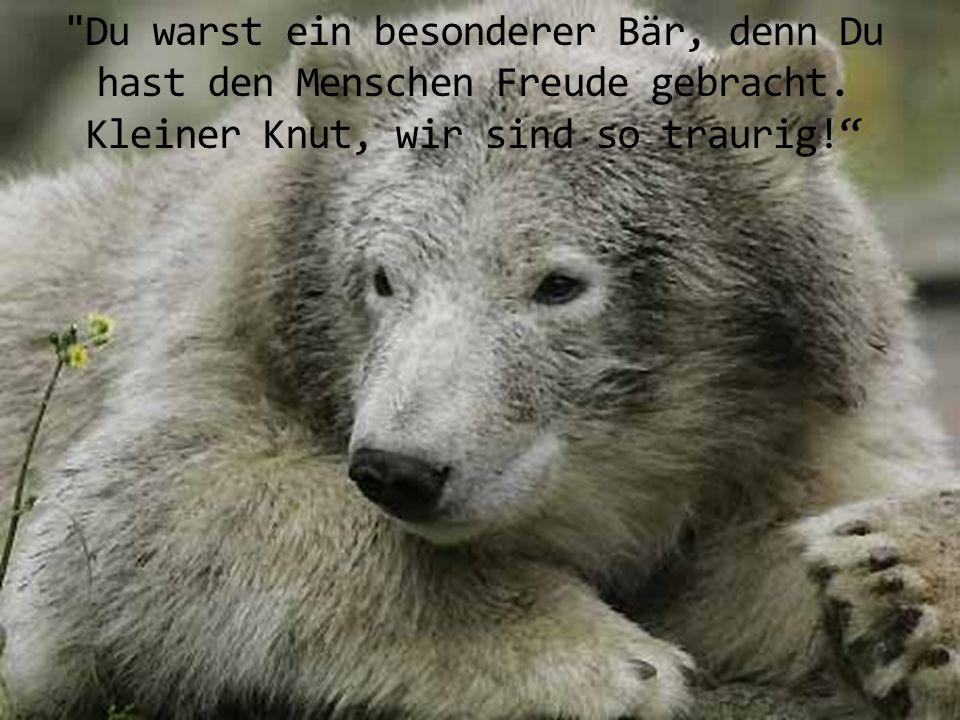 Du warst ein besonderer Bär, denn Du hast den Menschen Freude gebracht.