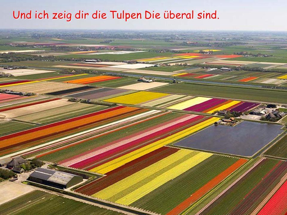 Und ich zeig dir die Tulpen Die überal sind.