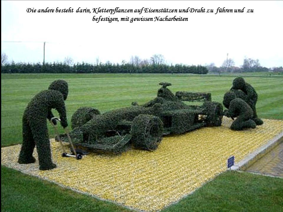 Die andere besteht darin, Kletterpflanzen auf Eisenstützen und Draht zu führen und zu befestigen, mit gewissen Nacharbeiten