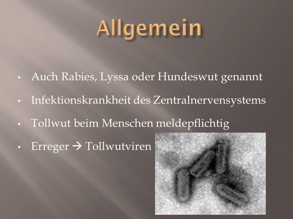 Allgemein Auch Rabies, Lyssa oder Hundeswut genannt