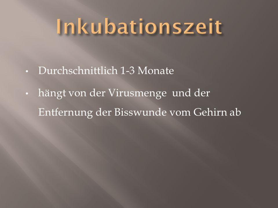 Inkubationszeit Durchschnittlich 1-3 Monate
