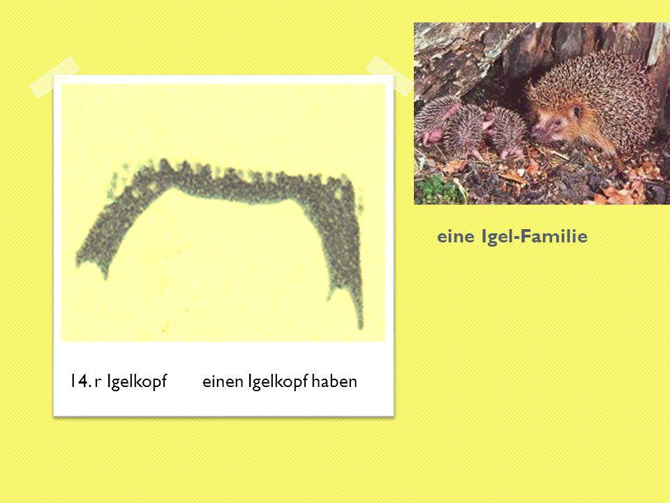 eine Igel-Familie 14. r Igelkopf einen Igelkopf haben