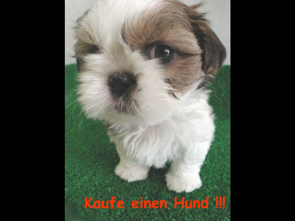Kaufe einen Hund !!!
