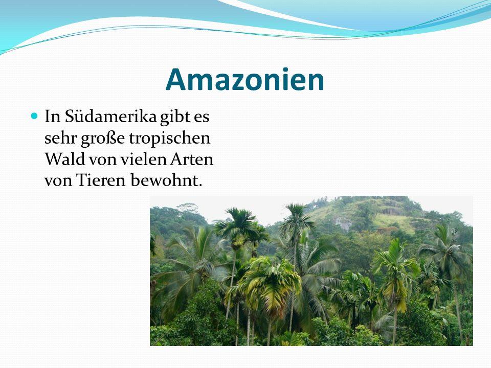 Amazonien In Südamerika gibt es sehr große tropischen Wald von vielen Arten von Tieren bewohnt.