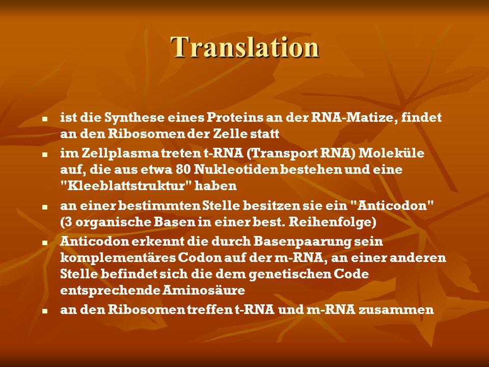 Translation ist die Synthese eines Proteins an der RNA-Matize, findet an den Ribosomen der Zelle statt.