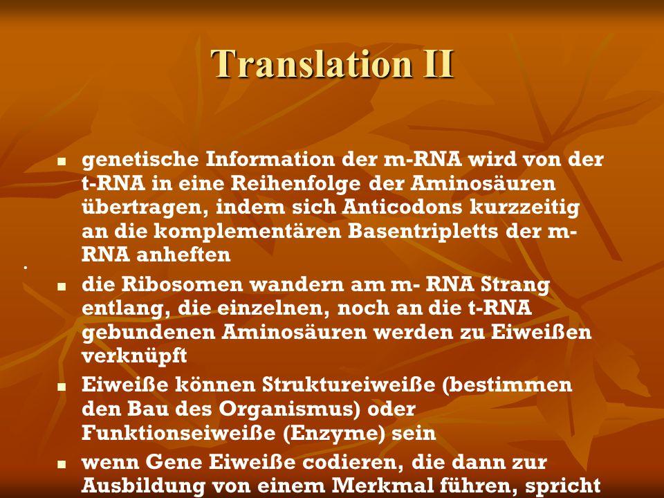 Translation II