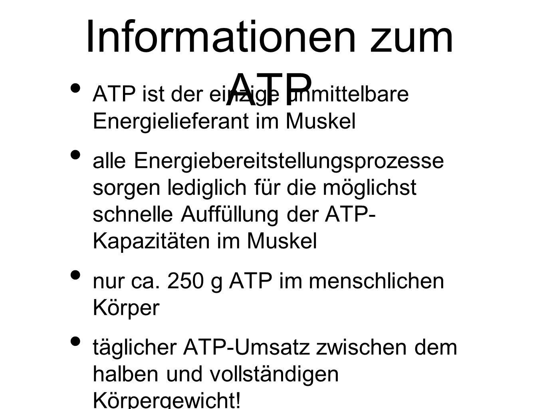 Informationen zum ATP ATP ist der einzige unmittelbare Energielieferant im Muskel.