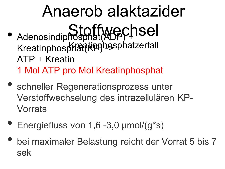 Anaerob alaktazider Stoffwechsel Kreatinphosphatzerfall