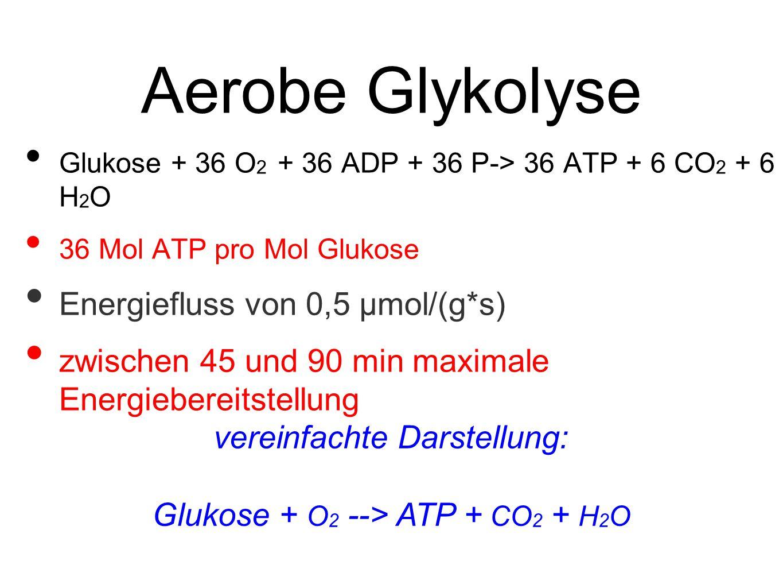 Aerobe Glykolyse Energiefluss von 0,5 μmol/(g*s)