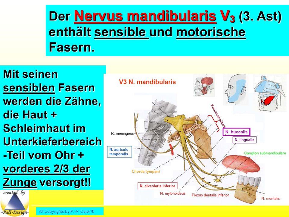 Der Nervus mandibularis V3 (3