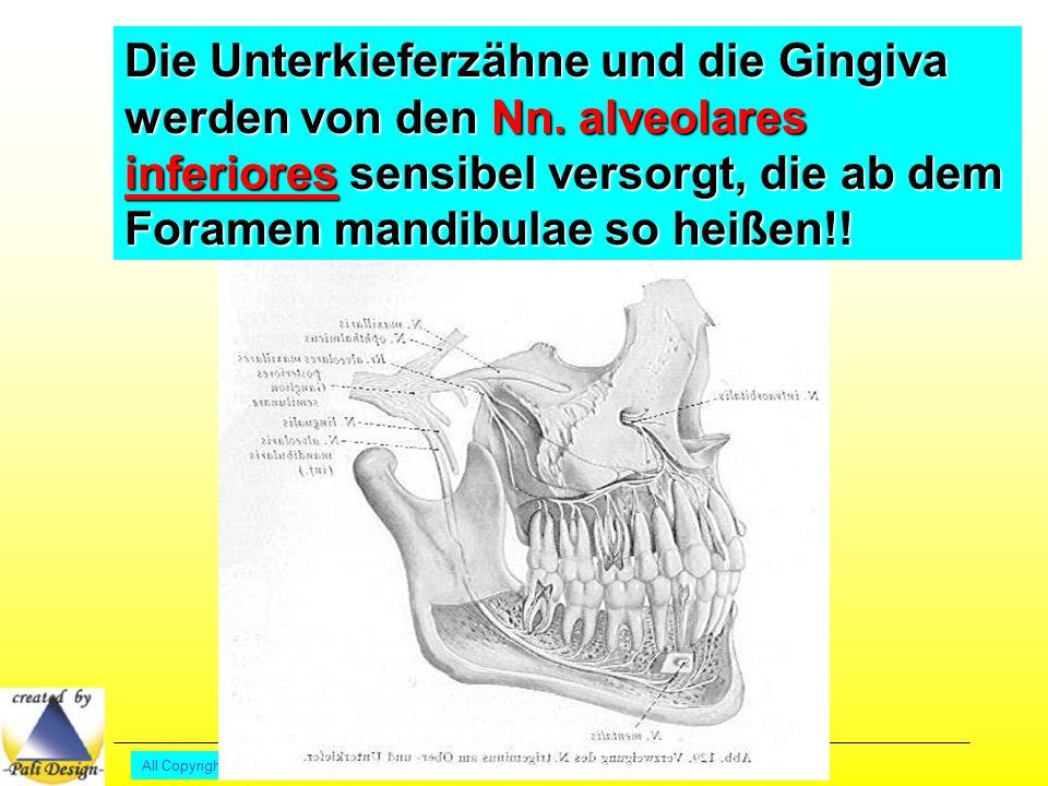 Die Unterkieferzähne und die Gingiva werden von den Nn