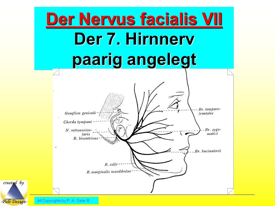 Der Nervus facialis VII Der 7. Hirnnerv paarig angelegt