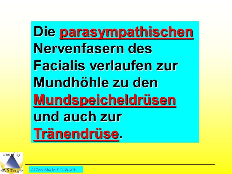 Die parasympathischen Nervenfasern des Facialis verlaufen zur Mundhöhle zu den Mundspeicheldrüsen und auch zur Tränendrüse.