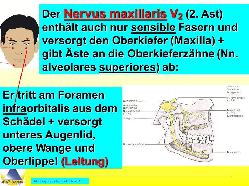 Der Nervus maxillaris V2 (2