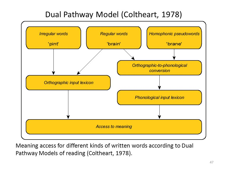 Dual Pathway Model (Coltheart, 1978)