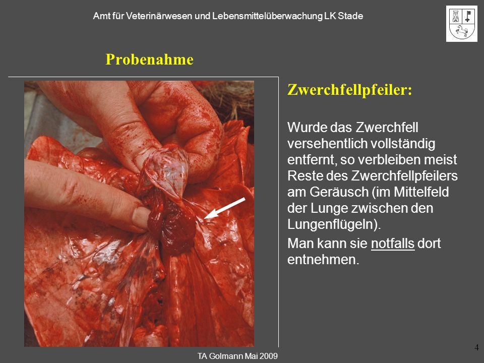 Entnahme von Trichinenproben beim Wildschwein Zwerchfellpfeiler: