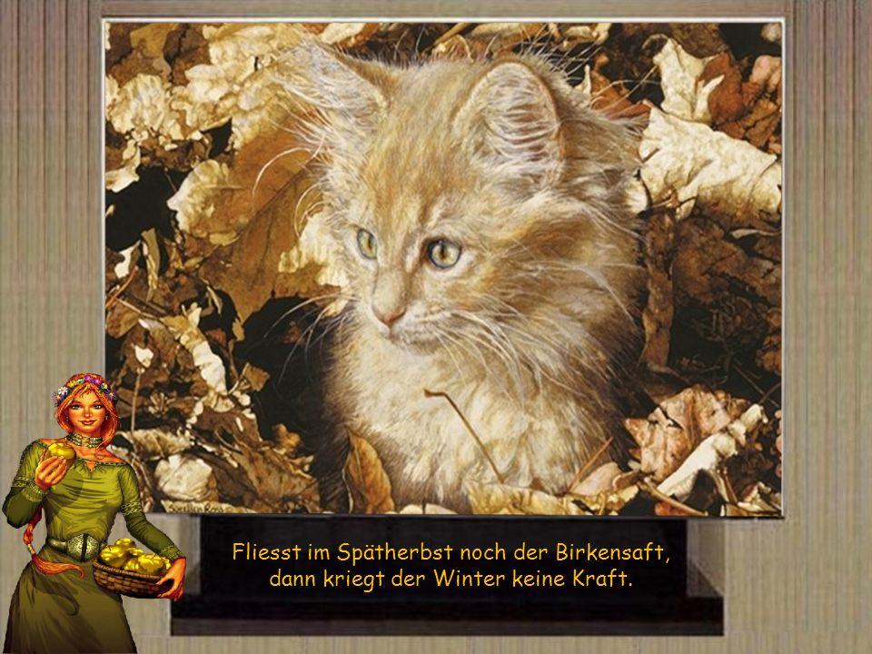 Fliesst im Spätherbst noch der Birkensaft, dann kriegt der Winter keine Kraft.