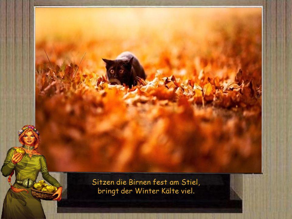 Sitzen die Birnen fest am Stiel, bringt der Winter Kälte viel.
