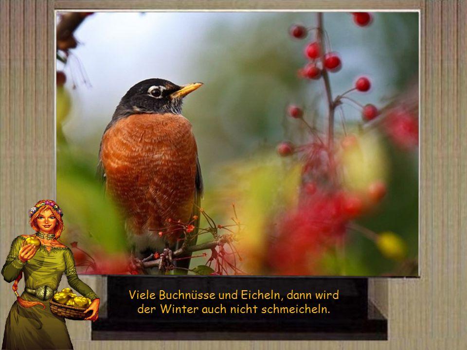 Viele Buchnüsse und Eicheln, dann wird der Winter auch nicht schmeicheln.