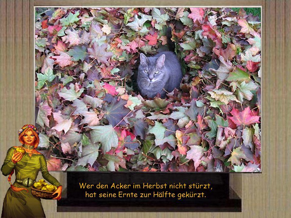 Wer den Acker im Herbst nicht stürzt, hat seine Ernte zur Hälfte gekürzt.