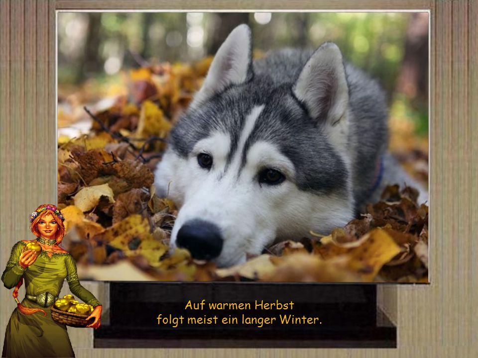 folgt meist ein langer Winter.