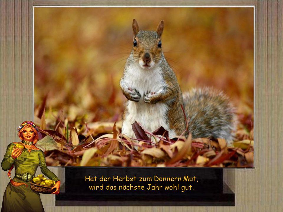 Hat der Herbst zum Donnern Mut, wird das nächste Jahr wohl gut.