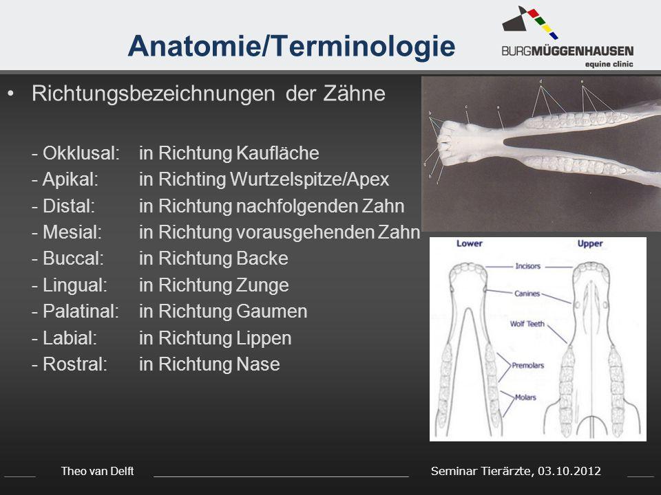 Anatomie/Terminologie
