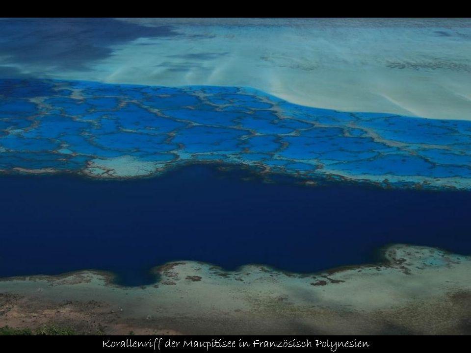 Korallenriff der Maupitisee in Französisch Polynesien