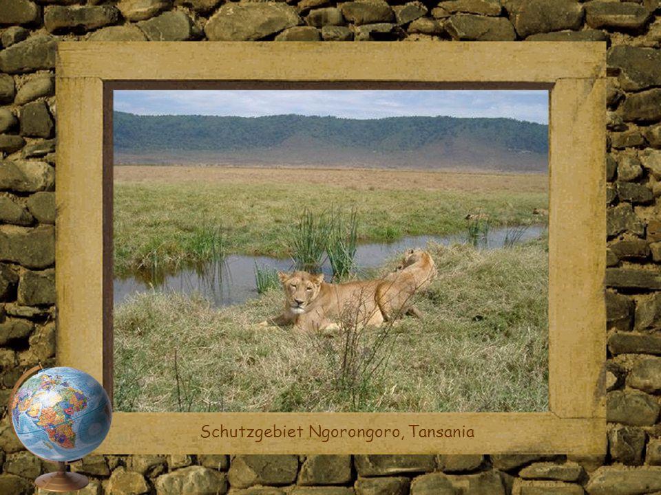 Schutzgebiet Ngorongoro, Tansania