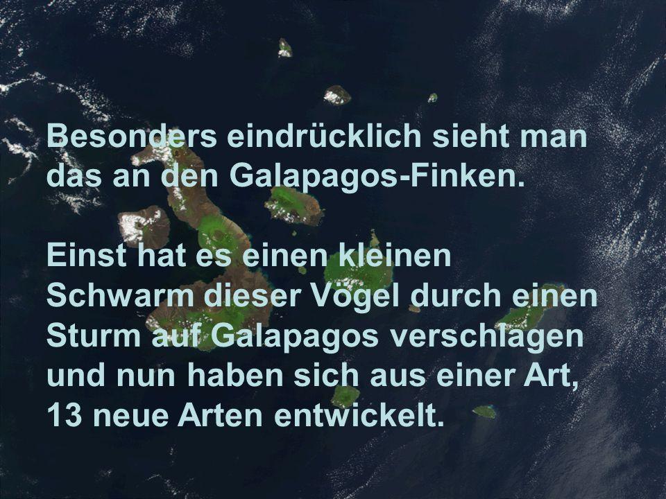 Besonders eindrücklich sieht man das an den Galapagos-Finken.