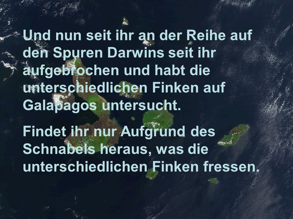 Und nun seit ihr an der Reihe auf den Spuren Darwins seit ihr aufgebrochen und habt die unterschiedlichen Finken auf Galapagos untersucht.