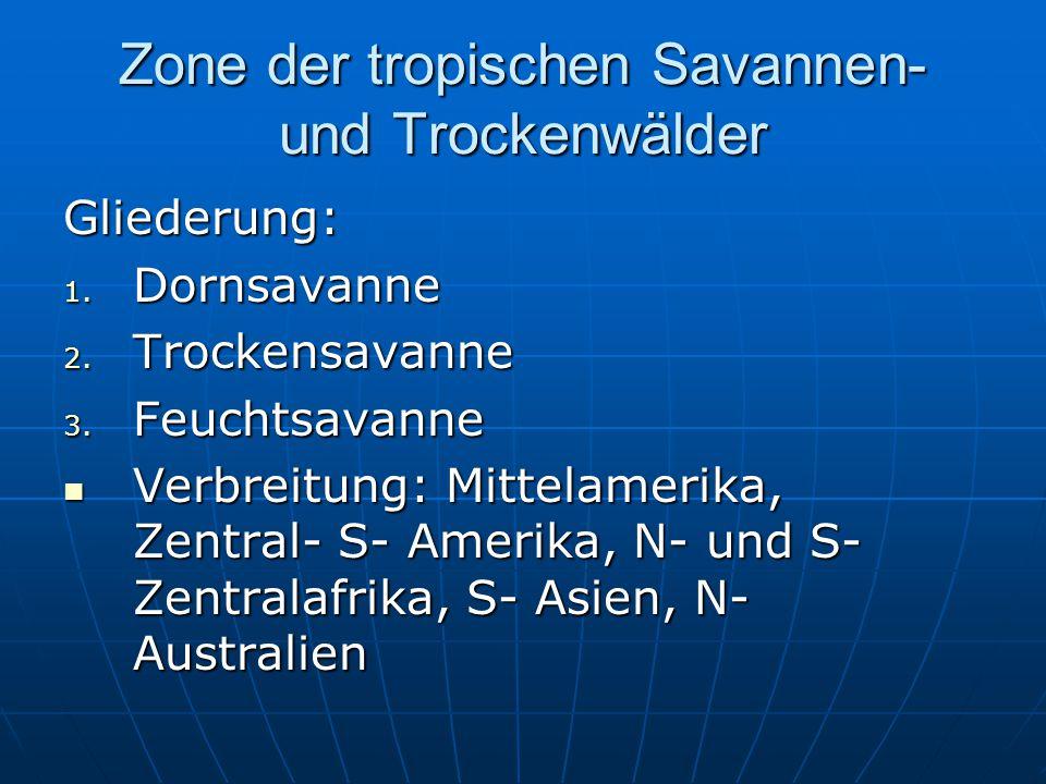 Zone der tropischen Savannen- und Trockenwälder