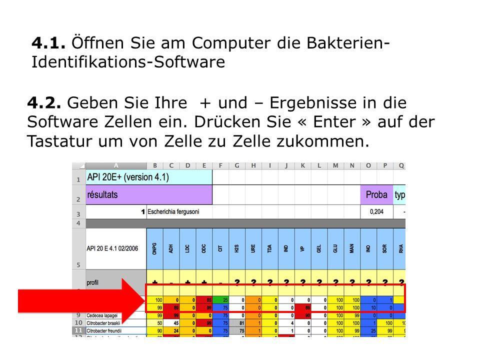 4.1. Öffnen Sie am Computer die Bakterien-Identifikations-Software
