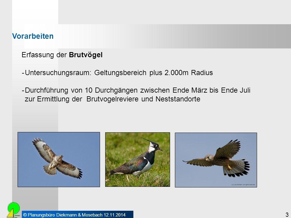 Vorarbeiten Erfassung der Brutvögel