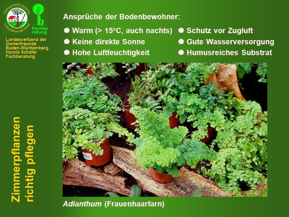 Zimmerpflanzen richtig pflegen Ansprüche der Bodenbewohner: