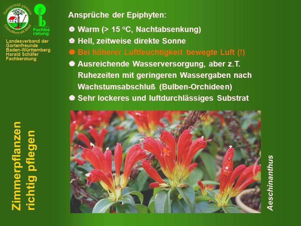 Zimmerpflanzen richtig pflegen Ansprüche der Epiphyten: