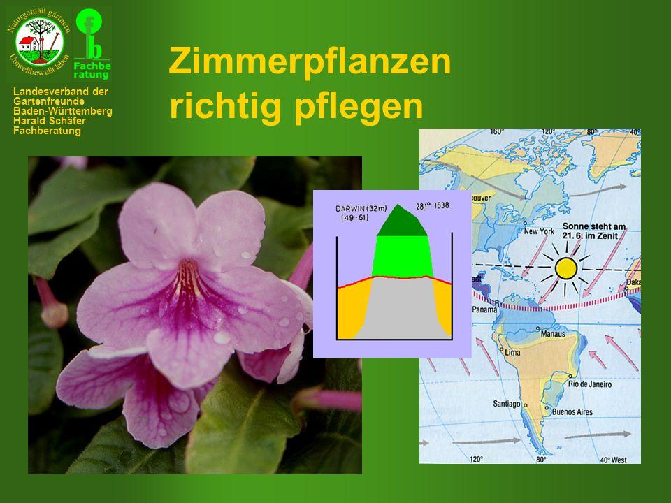 Zimmerpflanzen richtig pflegen Landesverband der Gartenfreunde
