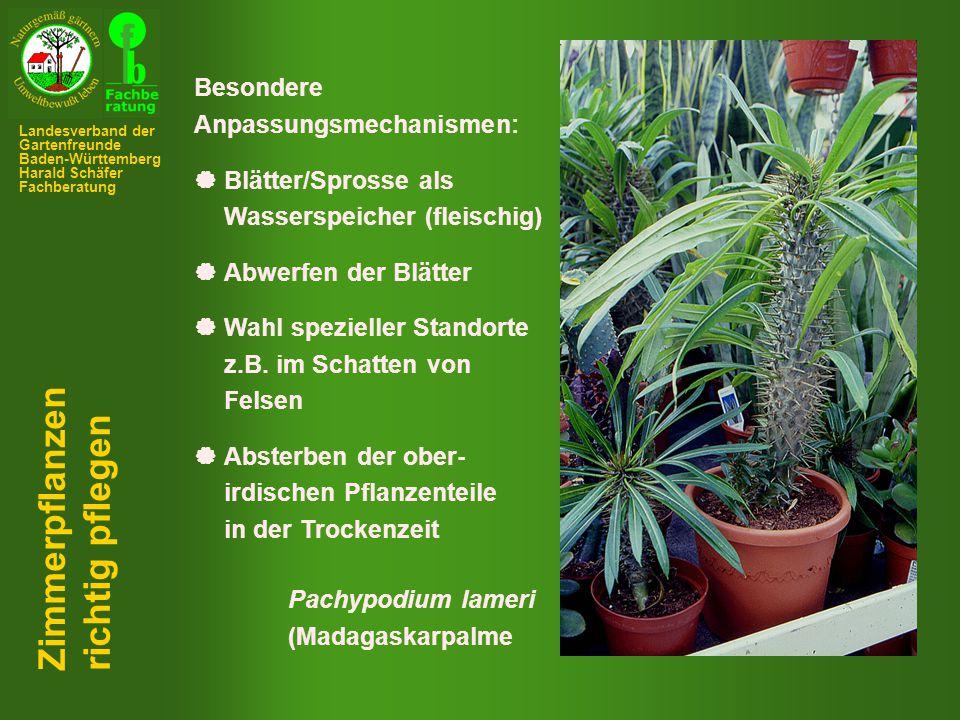 Zimmerpflanzen richtig pflegen Besondere Anpassungsmechanismen: