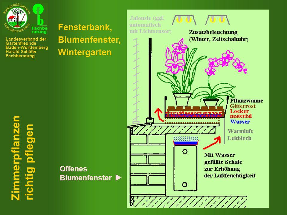 Zimmerpflanzen richtig pflegen Fensterbank, Blumenfenster,
