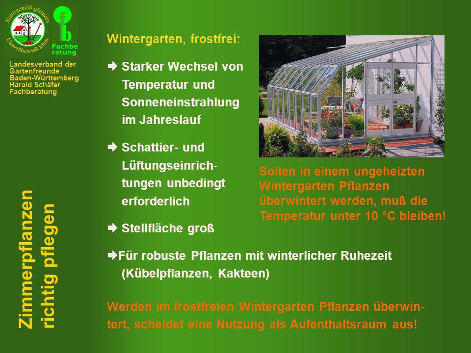 Zimmerpflanzen richtig pflegen Wintergarten, frostfrei: