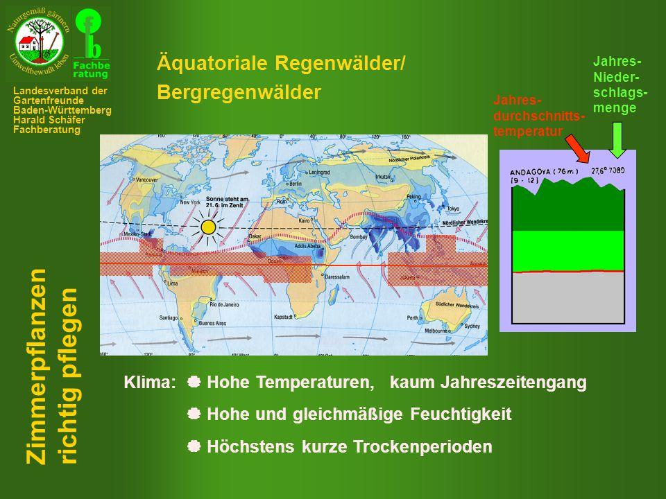 Zimmerpflanzen richtig pflegen Äquatoriale Regenwälder/