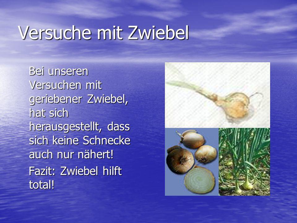 Versuche mit Zwiebel Bei unseren Versuchen mit geriebener Zwiebel, hat sich herausgestellt, dass sich keine Schnecke auch nur nähert!