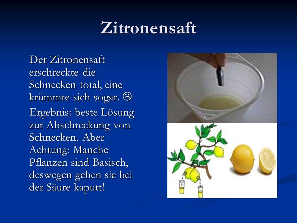 Zitronensaft Der Zitronensaft erschreckte die Schnecken total, eine krümmte sich sogar. 