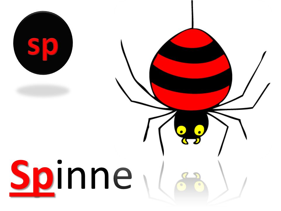 sp Spinne
