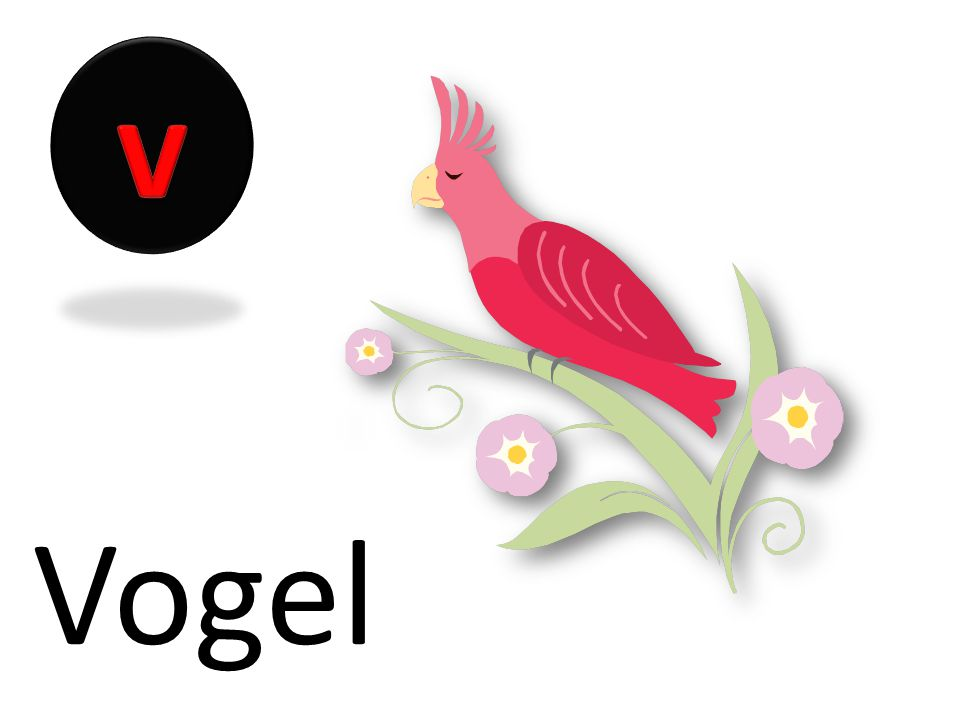 v Vogel