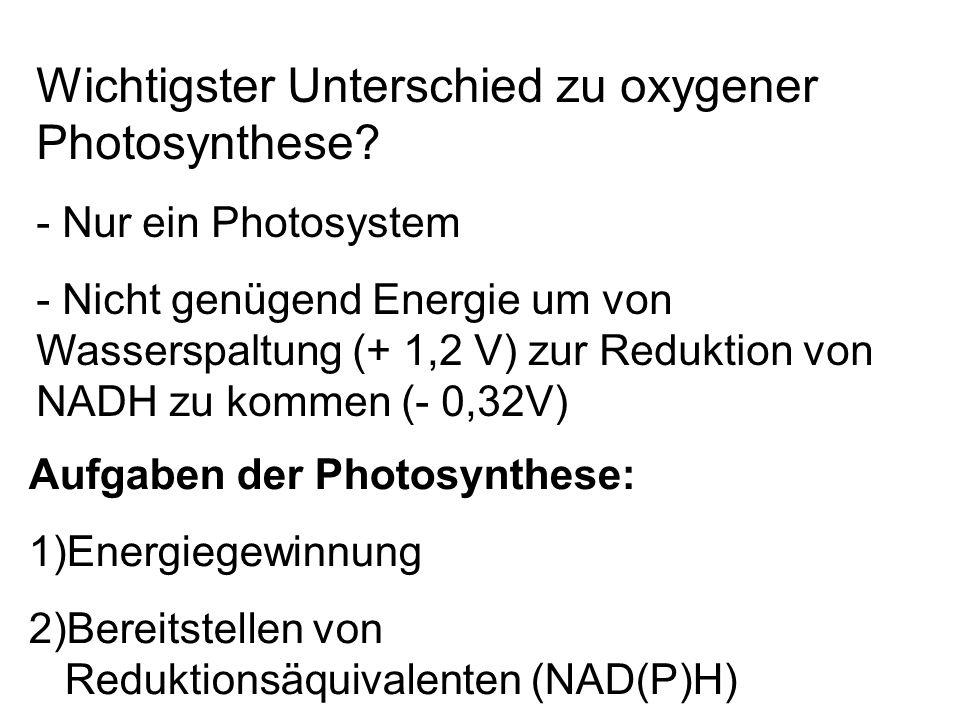Wichtigster Unterschied zu oxygener Photosynthese